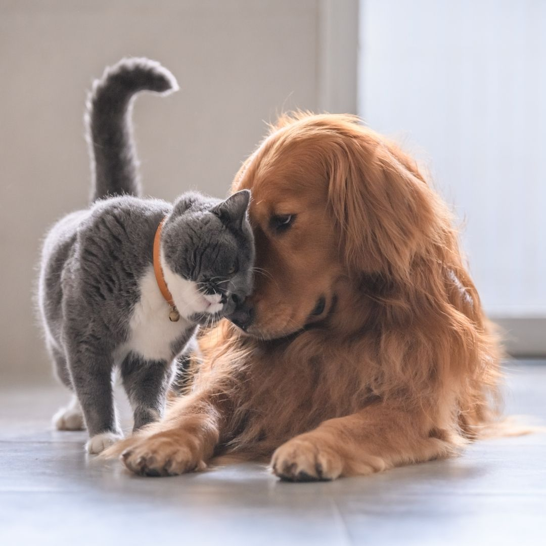 cane e gatto farmacia pierin